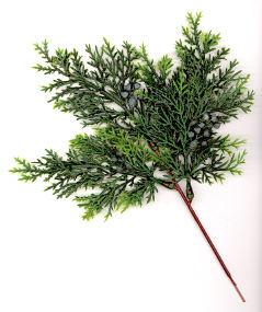 Juniper with berries pick