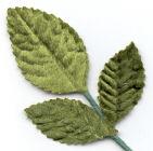 Rose Tiege Leaf