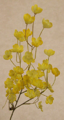 Almond Blossom - Yellow - 12 Pieces