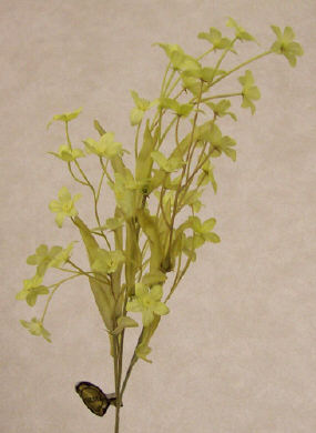 Gypsophelia - Pistacio - 12 Pieces
