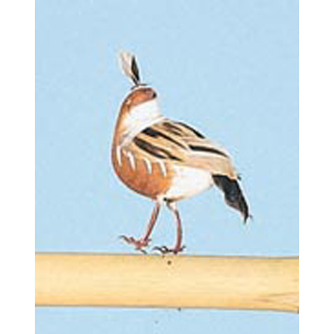 Bird - Quail - Brown and White - 1-1/2 inches - 2 pieces