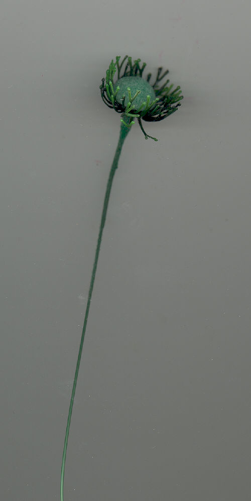 Poppy Center - Flocked - 3/4 inch head - 144 pieces.